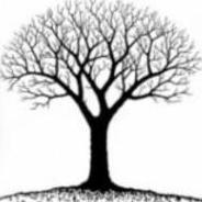 Try l'arbre